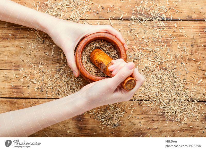 Eleutherokokkus in der Kräutermedizin Kraut Pflanze Kräuterbuch Medizin Heilung natürlich Gesundheit Kräuterkundige alternativ medizinisch Behandlung