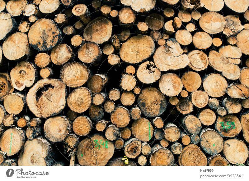gestapelte Holzstämme warten auf den Abtransport aus dem Wald holzstämme heizen Raummeter Baumstamm Forstwirtschaft Brennholz Holzstapel Brennstoff Totholz