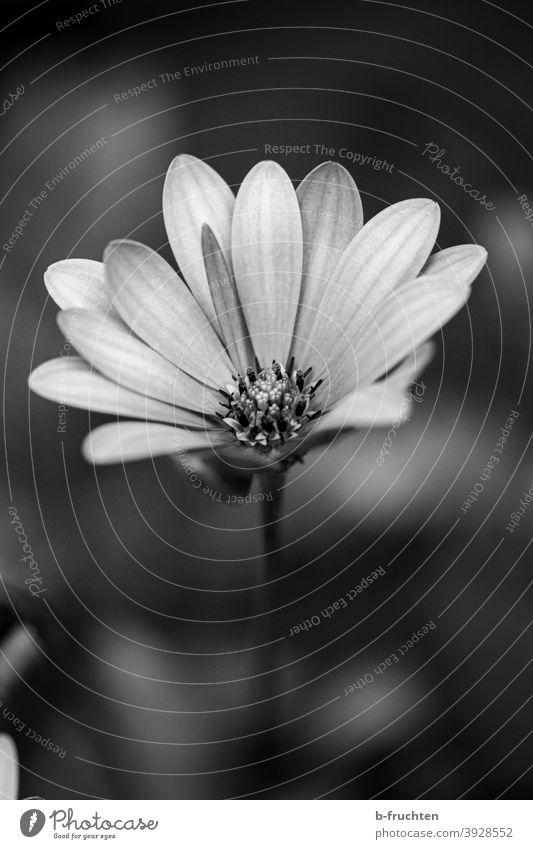einzelne zarte Blüte Blume Pflanze Nahaufnahme Makroaufnahme Natur Frühling Detailaufnahme Außenaufnahme Sommer Garten Unschärfe Blütenblatt Blühend natürlich