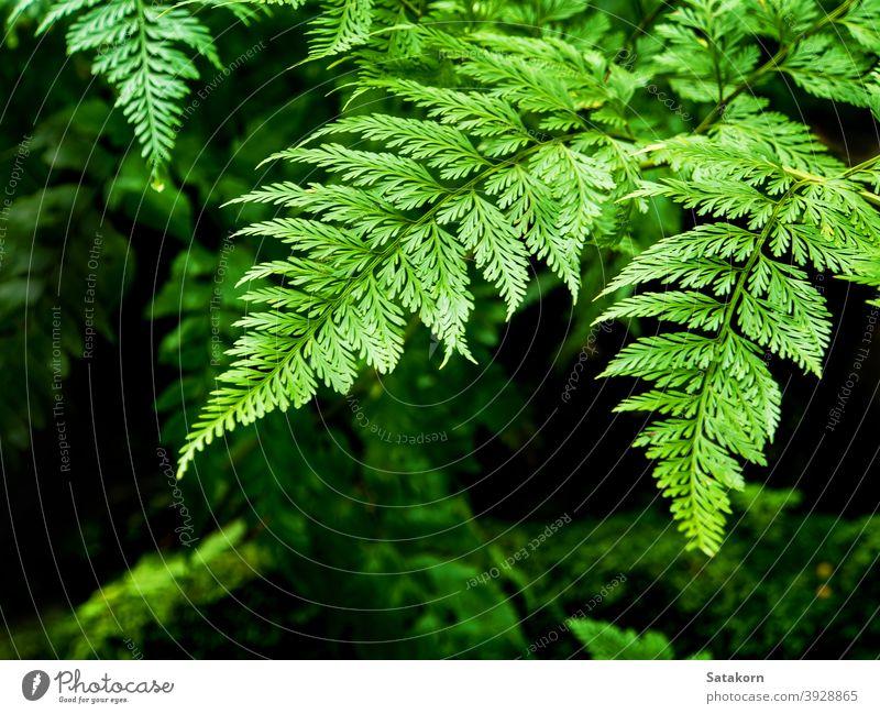 Frische Farnblätter mit Moos und Algen im tropischen Garten Wurmfarn Blätter grün feucht nass Tau Natur frisch Makro Wald Tropfen üppig (Wuchs) Schönheit Saison