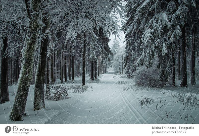Winterwald in Thüringen Rennsteig Thüringer Wald Schneekopf Bäume verschneit Frost kalt Weg Loipe Skifahren Langlauf Urlaub Touristen Tourismus reisen Erholung
