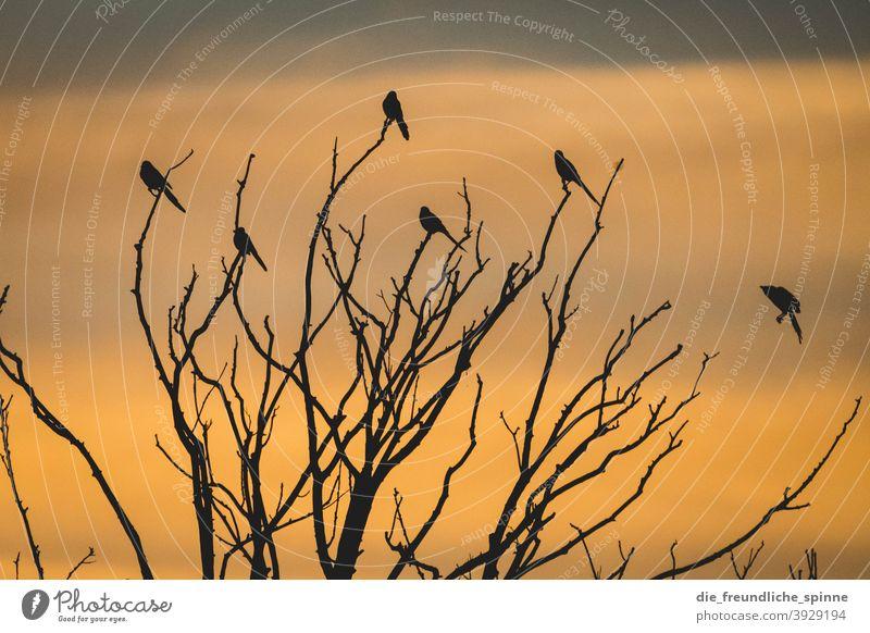 Vögel im Sonnenuntergang Vogel Ornith Sonnenaufgang Gegenlicht fliegen gelb Außenaufnahme Farbfoto Tier Himmel Dämmerung Menschenleer Sonnenlicht Natur Wolken