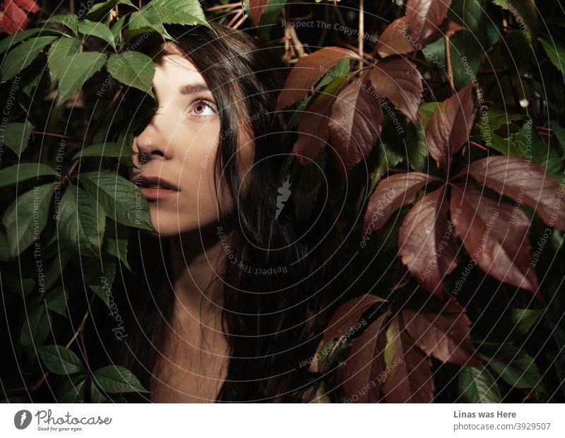 Der Herbst ist da und dieses brünette Mädchen versteckt sich unter bunten Blättern. Die wunderschöne Brünette Modell posiert für eine stimmungsvolle Herbst Porträt und ihre Augen scheinen so rot wie diese Herbstblätter.
