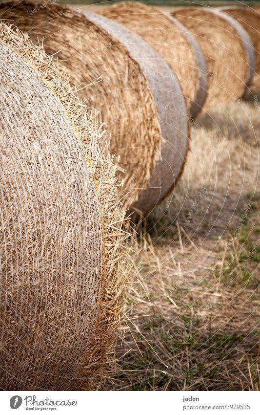 ein bisschen vom sommer träumen. Feld Sommer Landwirtschaft Ernte Natur Landschaft Strohballen Wiese gelb Menschenleer sonniges Wetter rollen Reihe liegen rund