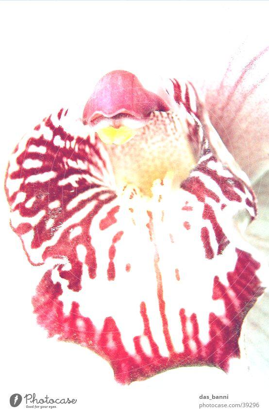 schön Natur weiß Blume gelb nah violett Orchidee