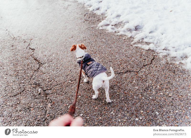 unerkennbar Frau zu Fuß im Freien mit Hund in den Schnee tragen Mantel. Wintersaison laufen Besitzer Berge u. Gebirge reisen Lifestyle Fernweh reisend Spaß kalt