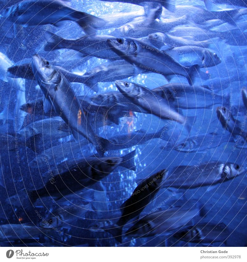 Traffic Jam Umwelt Natur Landschaft Urelemente Wellen Seeufer Meer Teich blau Fisch Unterwasseraufnahme Unterwasseraquarium Unterwasserkamera Lichtschein