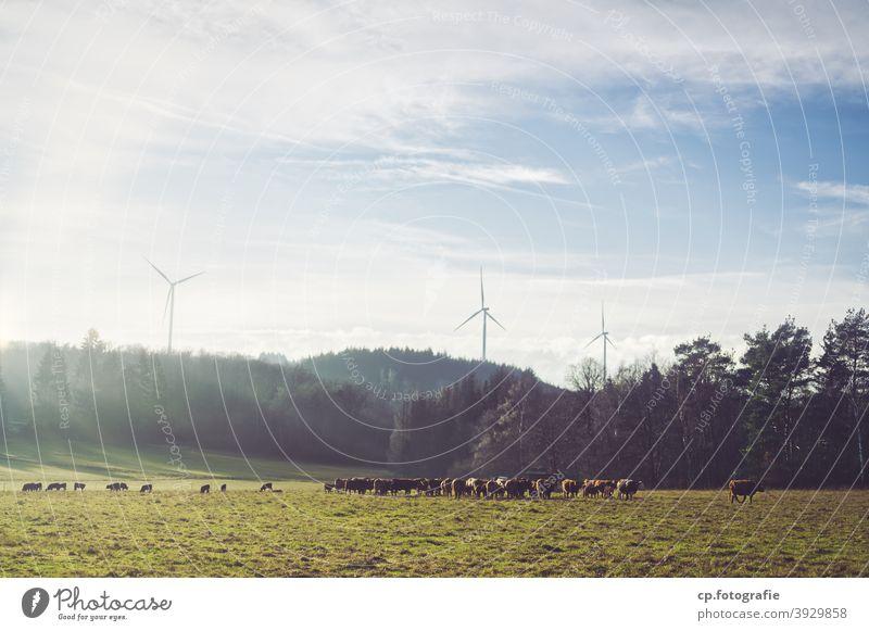 Rinderherde vor drei Windrädern Windrad Kühe Wald Weide Sonnenlicht Winter Landschaft Wolken Menschenleer ökostrom klimaschädlich