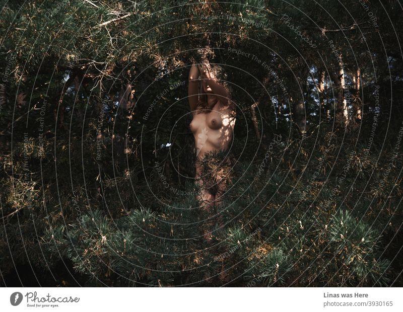 Das nackte Mädchen versteckt sich in diesen dunklen Wäldern. Sinnliche und erotische Bild einer wunderschönen nackten Frau zwischen diesen stacheligen Zweigen der Kiefern. Sexy Kurven und wilde Natur ist eine visuell perfekte Übereinstimmung für ein lustvolles Bild.