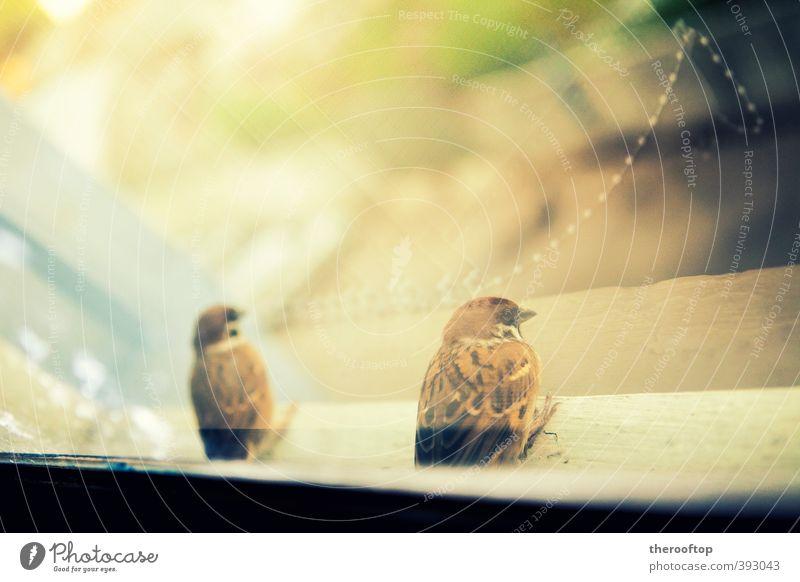 schön Erholung Tier gelb Freiheit natürlich hell träumen Vogel Zusammensein Tierpaar Wildtier niedlich beobachten genießen gut