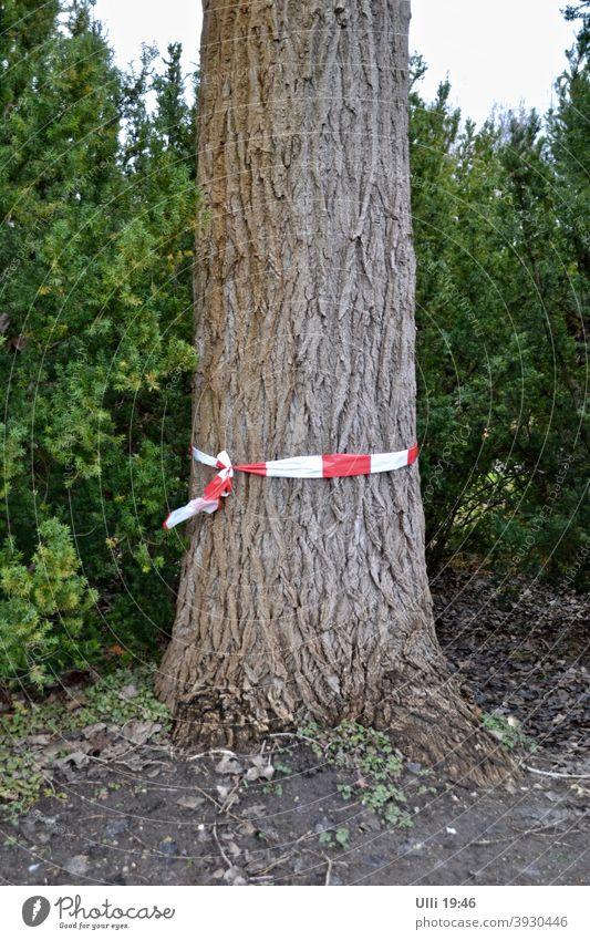 Markierter Baum am Wegesrand. Krank? Zu dick? Baumstamm Baum im Vordergrund rot-weiß Markierung grüner Hintergrund markierter Baum Absperrungsband