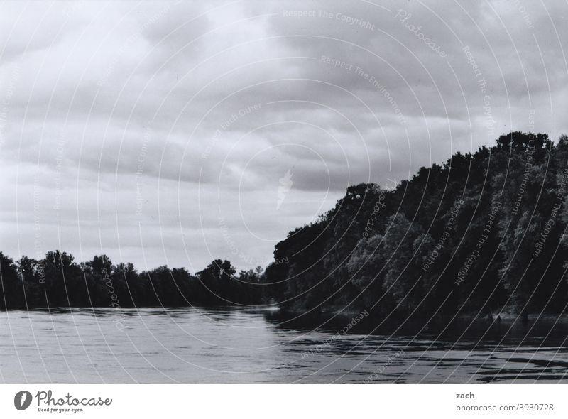 Elbufer Fluss Elbe Wasser Flussufer Wald See fließen Himmel Wolken Schwarzweißfoto