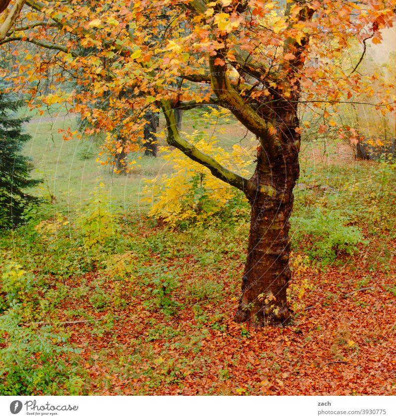 grün, gelb, rot | Herbstfarben herbstlich Herbstlaub Herbstfärbung Natur Blatt Baum Pflanze Vergänglichkeit