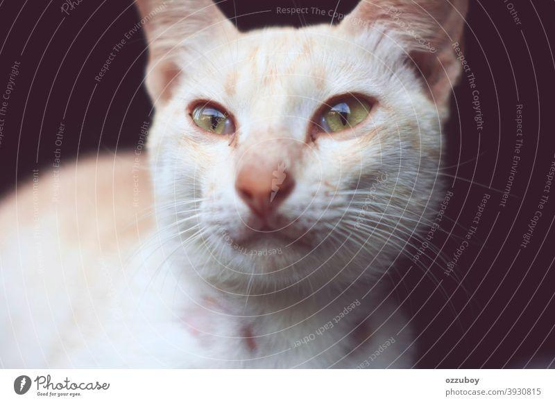 Portrait der Katze Porträt Tier Tierporträt Hauskatze Haustier Katzenauge Tiergesicht Blick Katzenkopf Schnurrhaar Säugetier Auge Wachsamkeit 1 niedlich