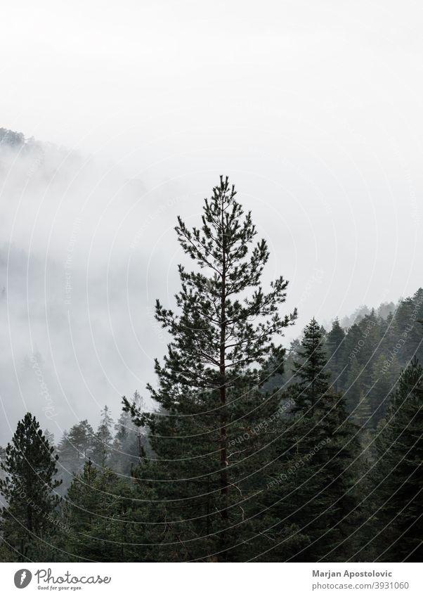 Neblige Bergkette am frühen Morgen Abenteuer Herbst Hintergrund schön Wolken kalt Morgendämmerung Umwelt Immergrün erkunden Tanne Nebel neblig Wald Freiheit