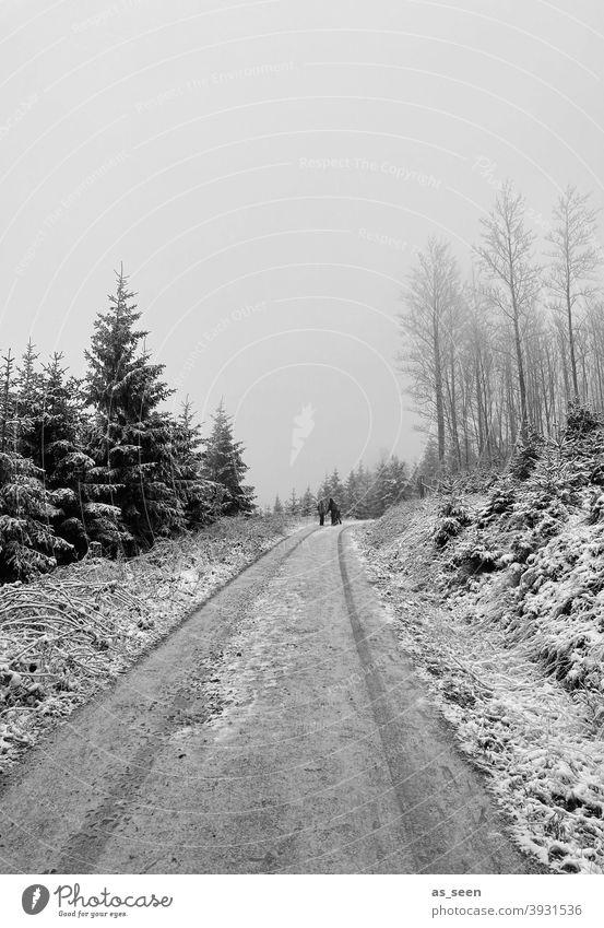 Verschneiter Weg Schnee Wald Winter Baum kalt Eis Frost Natur Außenaufnahme Landschaft weiß Umwelt Wetter Schneelandschaft Klima Winterstimmung Nebel