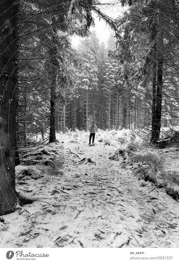 Im Winterwald Schnee Wald Person Baum kalt Eis Frost Natur Außenaufnahme Landschaft weiß Umwelt Wetter Schneelandschaft Klima Winterstimmung Nebel