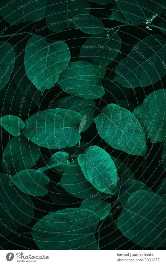 grüne Pflanzenblätter, grüner Hintergrund Blätter Blatt Garten geblümt Natur natürlich Laubwerk dekorativ Dekoration & Verzierung abstrakt texturiert Frische