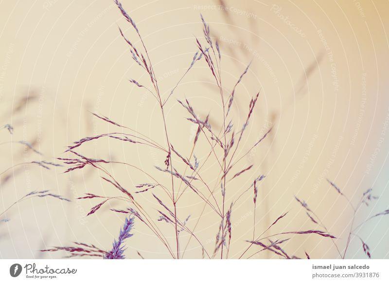 trockene Blumen mit dem Sonnenuntergang in der Natur Pflanzen blau Himmel Sonnenlicht hell Silhouette Garten geblümt romantisch Schönheit Zerbrechlichkeit
