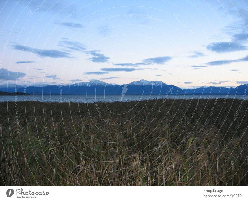 Ausblick Chiemsee Schilfrohr Wolken Bayern See Meer Horizont Ferien & Urlaub & Reisen Stimmung Dämmerung schön kalt Ferne Sonnenuntergang Berge u. Gebirge