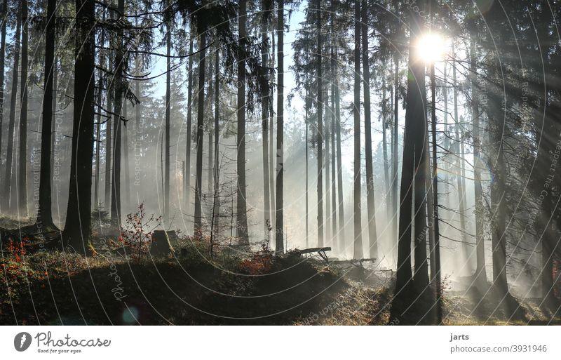 Lichtblick Wald Sonne Sonnenaufgang Sonnenstrahlen Bäume Nebel Morgen Baum Landschaft Natur Sonnenlicht Außenaufnahme Farbfoto Gegenlicht Umwelt Menschenleer