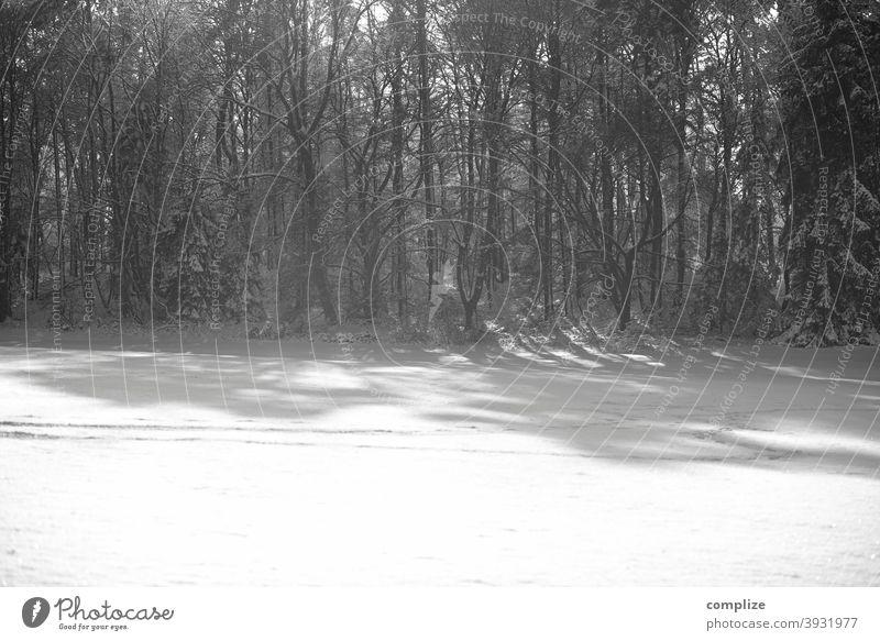 Schwarzweiß Wald im Winter - 1600 Schnee Fährte Pulverschnee laufen wandern Outdoor kalt verlaufen düster Schwäbische Alb Winterwald Schneewald Schneedecke