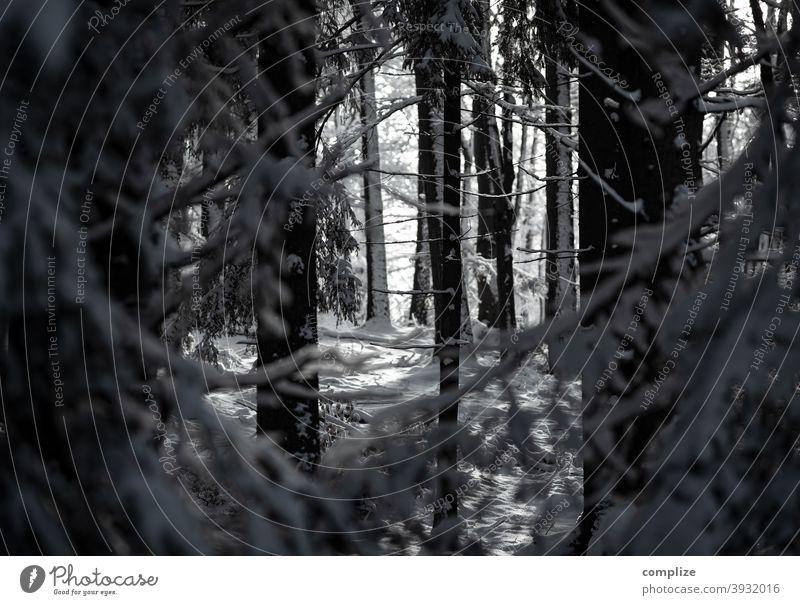 Winterwald Schnee Fährte Pulverschnee weiß laufen wandern Outdoor Wald kalt verlaufen düster Schwäbische Alb Schneewald Schneedecke