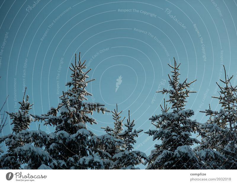 Schneebedeckte Tannen auf der Schwäbischen Alb Fährte Winter Pulverschnee weiß laufen wandern Outdoor Wald kalt verlaufen düster Schwäbische Alb Winterwald