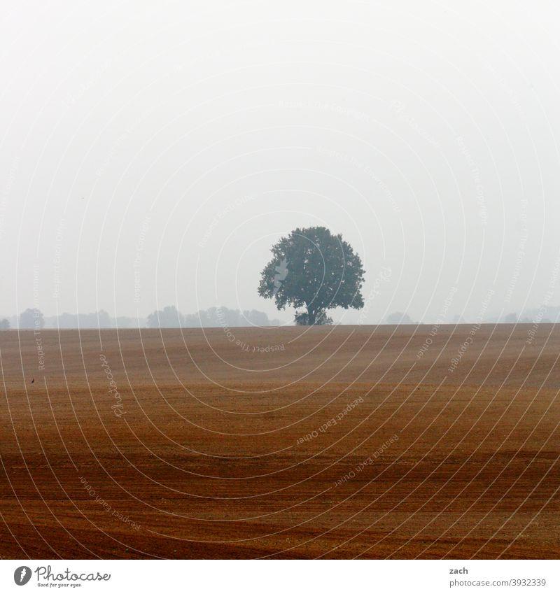 Einzelänger Gedeckte Farben Traurigkeit braun nass kalt verblüht Linie Feld Wiese Baum Pflanze Herbst Regen Natur Landschaft Winter Erde schlechtes Wetter