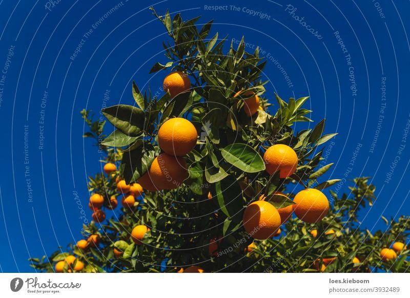 Nahaufnahme einer Orange Obstbaum auf tiefblauen sonnigen Himmel in Spanien orange Baum Frucht natürlich Zitrusfrüchte reif Ackerbau Lebensmittel Vitamin