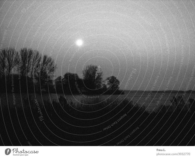 Mond über Schwerin Abend Himmel Baum Schlosspark See Außenaufnahme ,Mondschein Natur Nachthimmel Vollmond Winter Herbst Bäume büsche