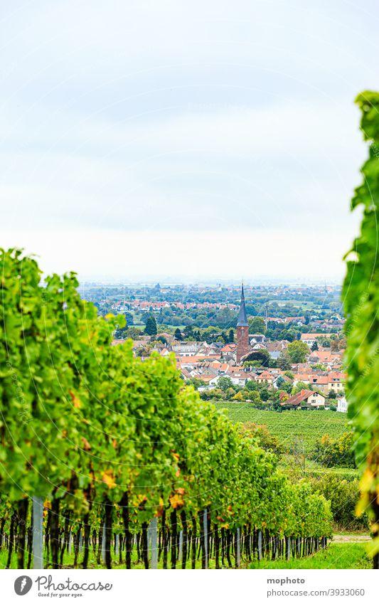 Weinberge, Deidesheim (Pfalz), Deutschland Kirche Landschaft Natur ausblick ausflugsziel bewölkt deidesheim dorf grün landwirtschaft morgen morgens nebel