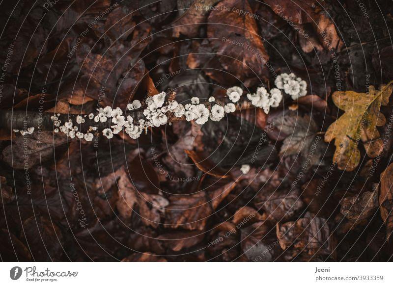 Jeder hat seinen Platz   Baumpilz an einem Ast, der auf dem feuchten Waldboden liegt Umwelt Natur Planze dunkel braun Blatt Blätter schwarz Pilz Baumstamm