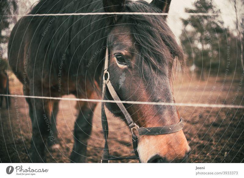 Perd auf der Weide Pferd Pferde Pferdeschwanz Pferdekopf Mähne Pferdezucht Tier Außenaufnahme Tierporträt braun Natur Farbfoto Tiergesicht wild stehen Tag