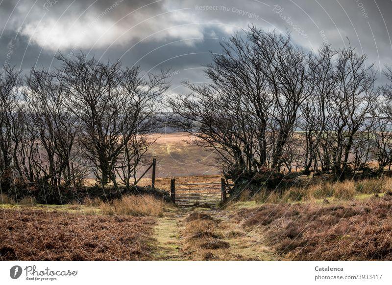 Der Weg führt durch das Tor  in der wild gewachsenen Hecke, von einer Weide zur nächsten in der Hochmoorlandschaft Tageslicht Landschaft kalt Winter Himmel Gras