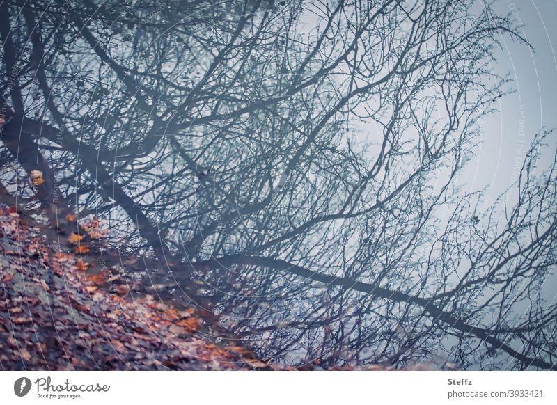 oben oder unten, ganz gleich Spiegelung blau Abbild Verzerrung Wasserspiegelung irreal Spiegelung im Wasser Herbstlaub verzerrte Wahrnehmung verzerrte Sicht