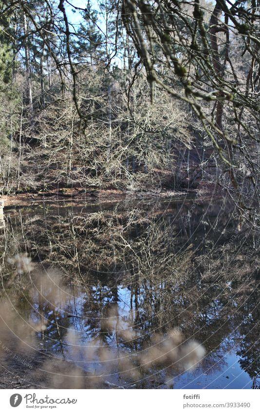 Oh, Weiher See Waldsee Spiegelung Wasser Wasseroberfläche Natur Reflexion & Spiegelung Außenaufnahme Menschenleer Landschaft Teich Idylle ruhig friedlich