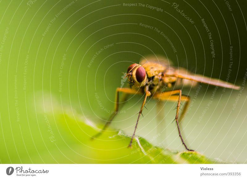 Platz in der Sonne Fliege beobachten fliegen stachelig grün Brachycera Zweiflügler Kopf Auge Facettenauge Farbfoto Makroaufnahme Schwache Tiefenschärfe