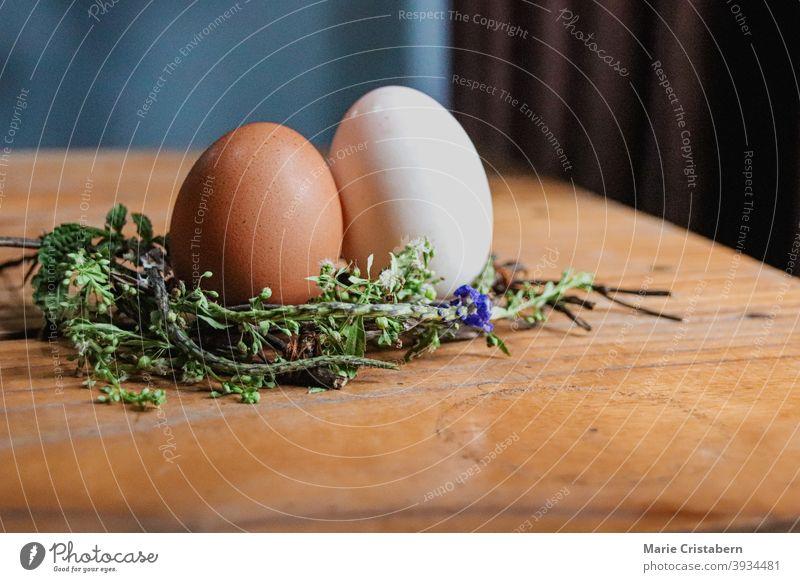 Braunes und weißes Ei auf einem Nest aus Blumen als Dekoration für den kommenden Frühling und Ostern Frühjahrssaison Osterei traditioneller Feiertag Blumennest