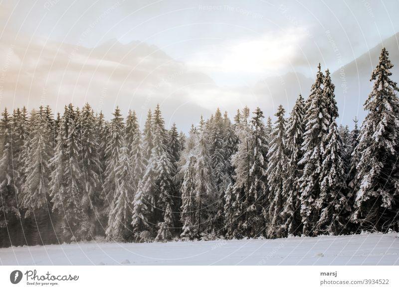Winterwald mit Bergen im Hintergrund Wintertag Winterstimmung Winterzauber winterlich Schnee kalt Natur Fichtenwald Landschaft Frost Winterurlaub weiß