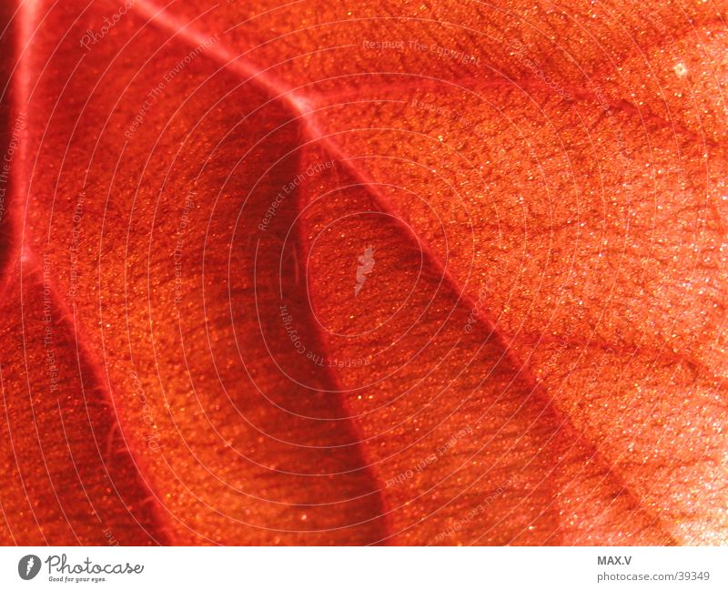 Blattadern rot Blatt Haare & Frisuren braun Gefäße