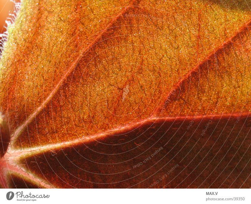 Pelzig rot Blatt Haare & Frisuren braun Gefäße