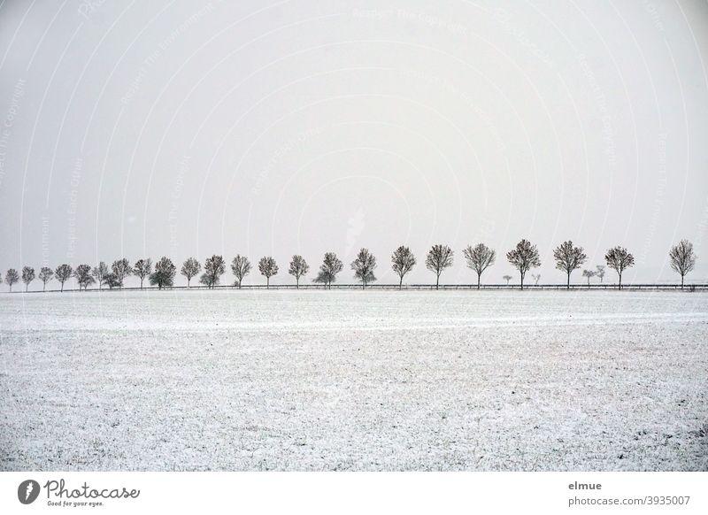 trübes Schneewetter liegt über dem Land links und rechts der Allee mit jungen Ahornbäumen / Winter / Verbindungsstraße / Einsamkeit Ahornbaum Baumallee Feld