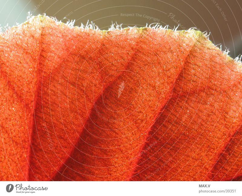 Blick über den Rand rot Blatt Haare & Frisuren braun Gefäße