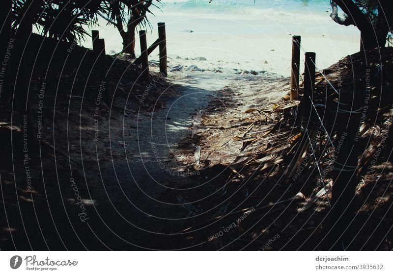 Mein Weg zum Strand Natur Küste Meer Sommer Landschaft Sand Wasser Wege & Pfade Pfosten Zaun Palmen Sonnenlicht Schatten Ferien & Urlaub & Reisen