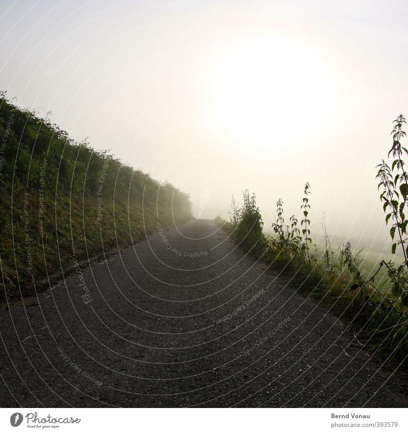 Der Weg zum LD Natur Himmel Sonne Sonnenlicht Pflanze Gras Sträucher Brennnessel Feld Hügel Wege & Pfade Asphalt Erholung Blick hell blau gelb grau grün schwarz