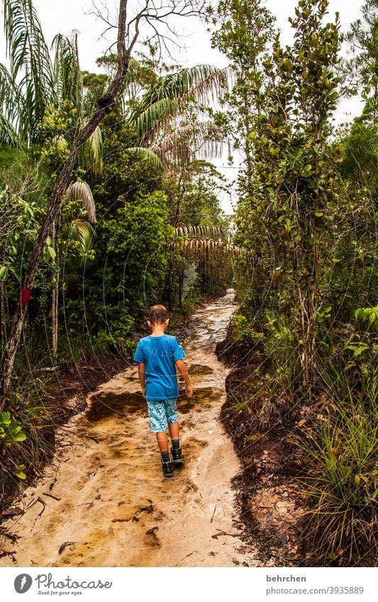 REGENwald bako nationalpark besonders Baum beeindruckend Natur Bako Nationalpark Licht Außenaufnahme Malaysia exotisch Farbfoto Tag Wildnis Kontrast Borneo