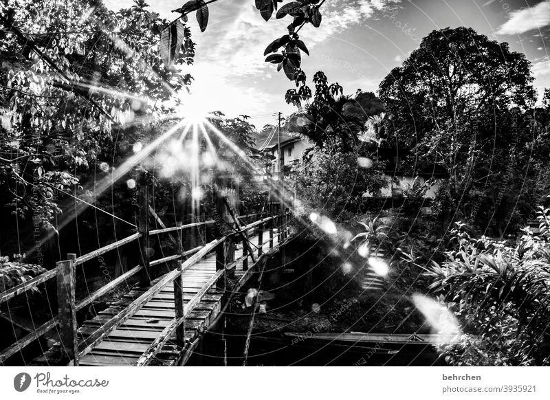 sehnsucht besonders Sonnenstrahlen Landschaft Urwald Natur traumhaft wunderschön Sonnenuntergang Abenddämmerung Gegenlicht Sonnenlicht Fluss Brücke Kontrast
