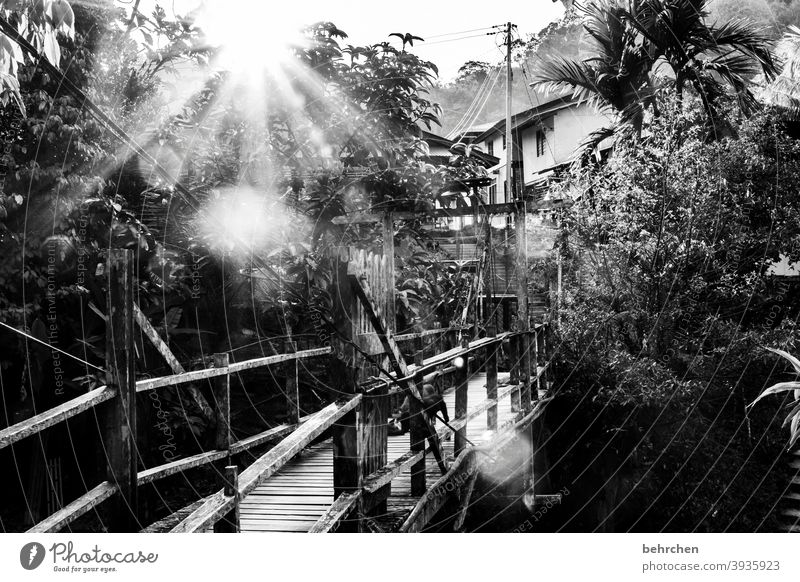 weit weg   lieblingsort am anderen ende der welt Schwarzweißfoto beeindruckend Außenaufnahme Baum Fernweh Iban authentisch Malaysia Borneo Freiheit Abenteuer