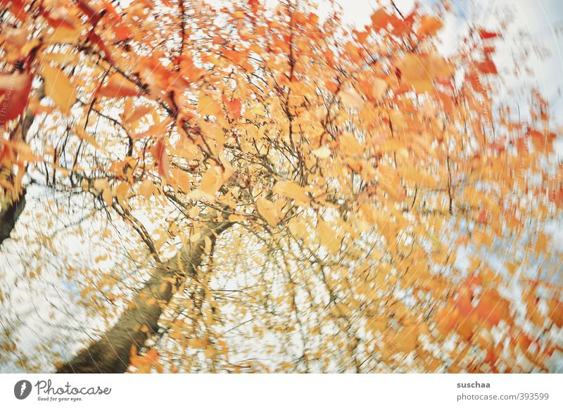 zur abwechslung Umwelt Natur Luft Himmel Herbst Klima Baum orange Baumstamm Ast Blatt rotieren Politische Bewegungen Bewegungsunschärfe Farbfoto Außenaufnahme